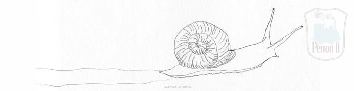 Sketch of a snail illustration for article